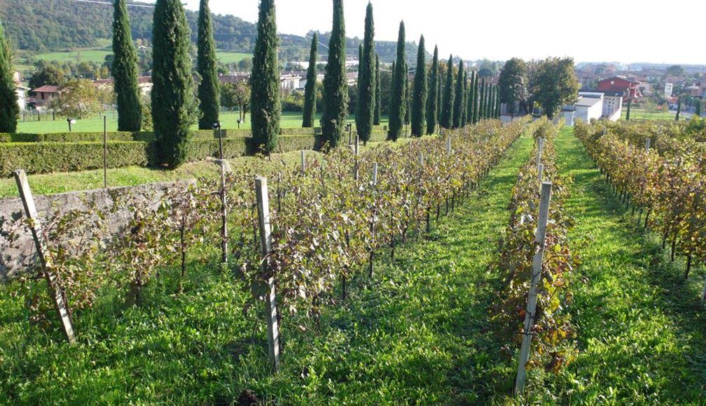 L'automne dans les vignes de Valcalepio