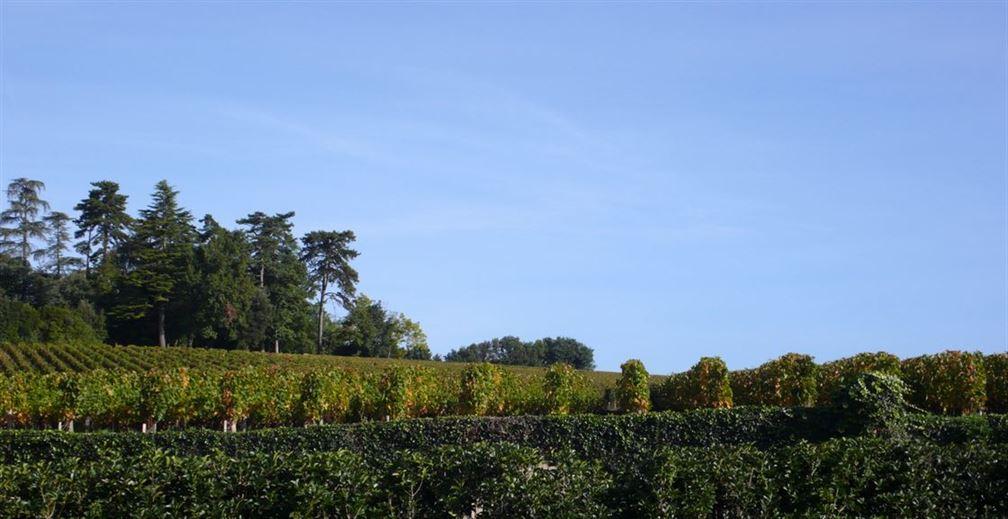 Fin de vendanges, ça sent déjà l'automne dans les vignes...
