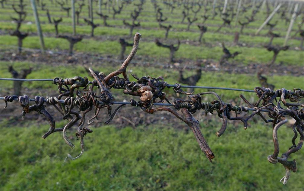 et maintenant allons dans les vignes...